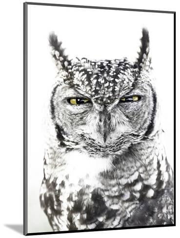 Spotted Eagle Owl, Kgalagadi Transfrontier Park, South Africa-James Hager-Mounted Photographic Print