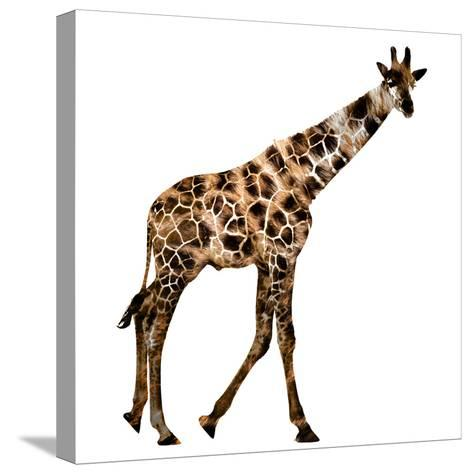 The Jaguar Patterned, Beautifully Confused Giraffe--Stretched Canvas Print