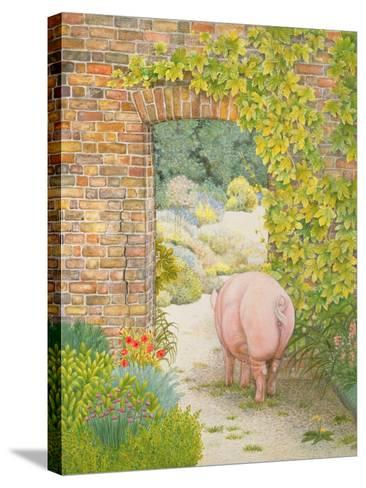 The Convent Garden Pig-Ditz-Stretched Canvas Print