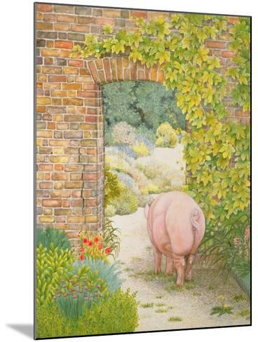 The Convent Garden Pig-Ditz-Mounted Giclee Print