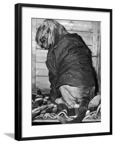 Bloodhound 1969-Birmingham Post Mail Archive-Framed Art Print