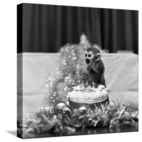 Pip the Squirrel Monkey-Sunday People-Stretched Canvas Print
