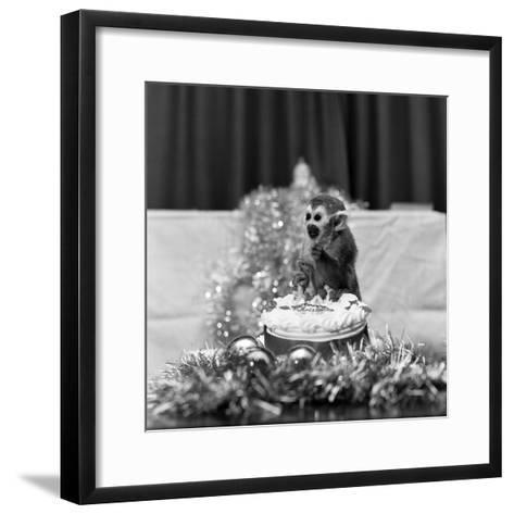 Pip the Squirrel Monkey-Sunday People-Framed Art Print