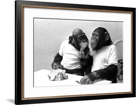 Two Chimpanzees celebrating Easter-Staff-Framed Art Print