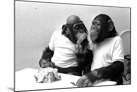 Two Chimpanzees celebrating Easter-Staff-Mounted Photographic Print