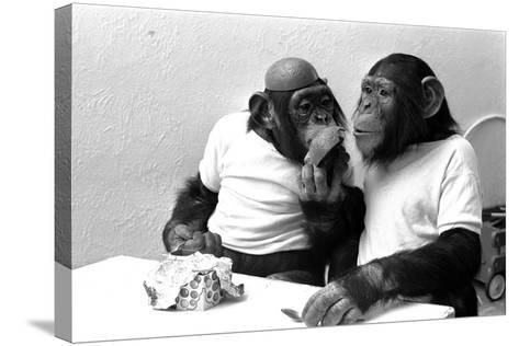 Two Chimpanzees celebrating Easter-Staff-Stretched Canvas Print