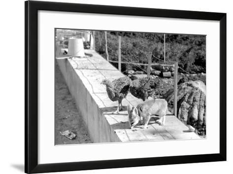Desert Fox 1972-Staff-Framed Art Print