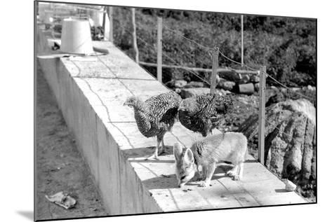 Desert Fox 1972-Staff-Mounted Photographic Print