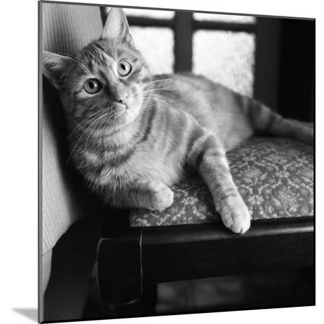 Ginger Cat-Staff-Mounted Photographic Print