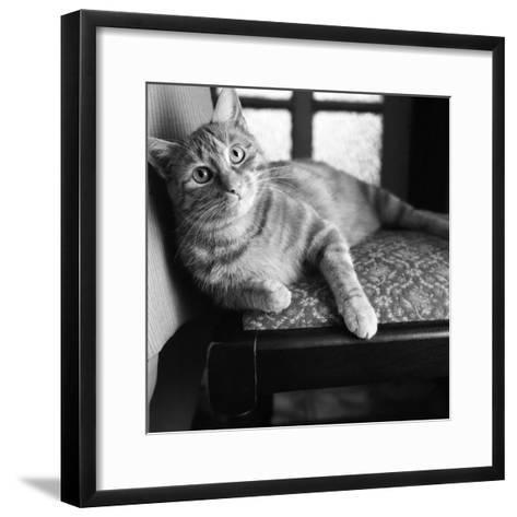 Ginger Cat-Staff-Framed Art Print