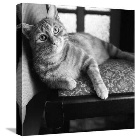 Ginger Cat-Staff-Stretched Canvas Print