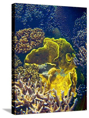 Barrier Reef Coral III-Kathy Mansfield-Stretched Canvas Print