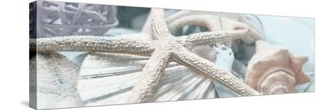 Gold Seashells I-Susan Bryant-Stretched Canvas Print