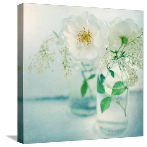 White Peonies-Sarah Gardner-Stretched Canvas Print