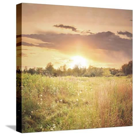 Field of Warmth Square-Kelly Poynter-Stretched Canvas Print