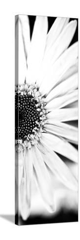White Bloom I-Susan Bryant-Stretched Canvas Print
