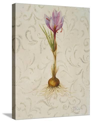 Botanica III-Patricia Pinto-Stretched Canvas Print