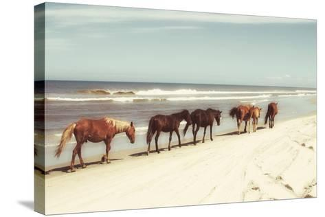 Horses on the Beach-Kathy Mansfield-Stretched Canvas Print