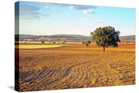 Castilla-La Mancha, Trees in Ploughed Agricultural Landscape Near Urda-Marcel Malherbe-Stretched Canvas Print