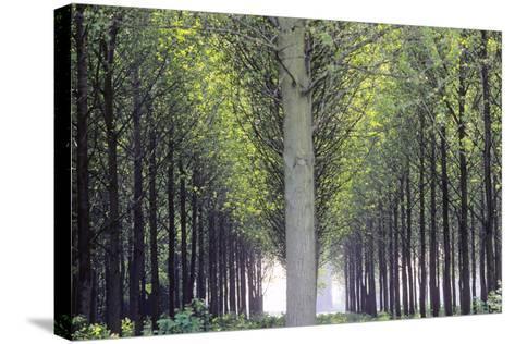 Flevoland, Man-Made Forest-Marcel Malherbe-Stretched Canvas Print