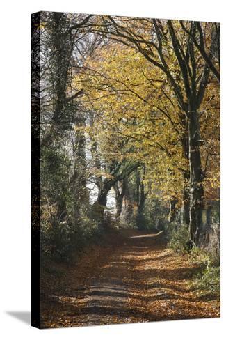 Country Road in Autumn, Hanson, Kornelimunster, Nordrhein-Westfalen, Germany-Florian Monheim-Stretched Canvas Print