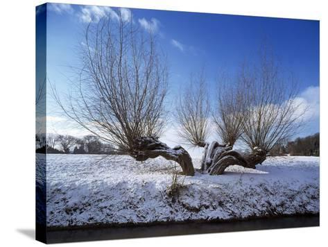 Wilnter Willow Tree by River at Meerbusch, Buderich - Germany-Florian Monheim-Stretched Canvas Print