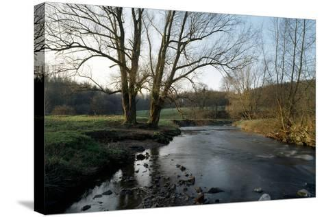 Bare Trees and River at Wurselen- Bardenberg,Wurmtal - Germany-Florian Monheim-Stretched Canvas Print