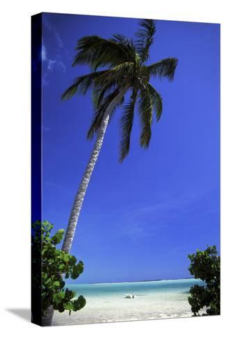 Palm Tree on a White Sand Beach, Bahamas-Natalie Tepper-Stretched Canvas Print