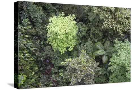 A Birds-Eye-View of Different Shades of Green from Trees Making Up the Forest-Stacy Bass-Stretched Canvas Print