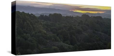 Oakland Redwood Park, East View Morning Panorama 2-Henri Silberman-Stretched Canvas Print