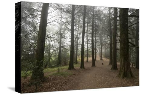 Forest Path Trees Dog-Henri Silberman-Stretched Canvas Print