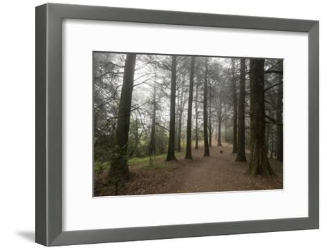 Forest Path Trees Dog-Henri Silberman-Framed Art Print