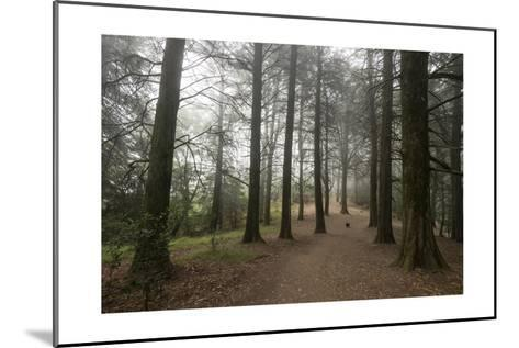 Forest Path Trees Dog-Henri Silberman-Mounted Photographic Print