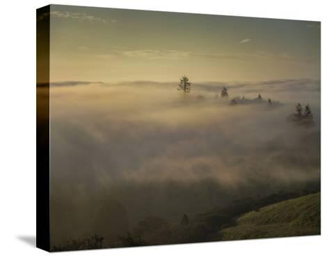 Oakland Redwood Park, East View Morning Fog-Henri Silberman-Stretched Canvas Print