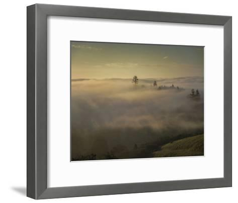 Oakland Redwood Park, East View Morning Fog-Henri Silberman-Framed Art Print