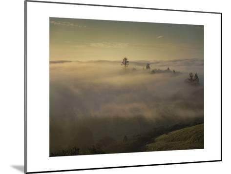 Oakland Redwood Park, East View Morning Fog-Henri Silberman-Mounted Photographic Print