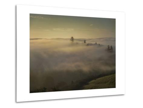 Oakland Redwood Park, East View Morning Fog-Henri Silberman-Metal Print
