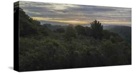 Oakland Redwood Park, East View Morning Clouds 3-Henri Silberman-Stretched Canvas Print