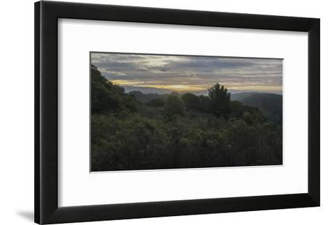 Oakland Redwood Park, East View Morning Clouds 3-Henri Silberman-Framed Art Print