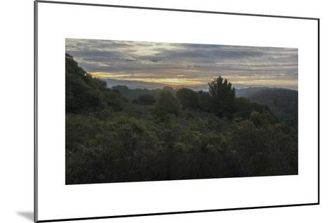 Oakland Redwood Park, East View Morning Clouds 3-Henri Silberman-Mounted Photographic Print