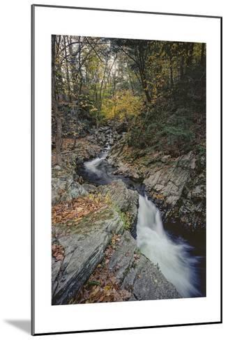 Woodland Stream Autumn Leaves-Henri Silberman-Mounted Photographic Print