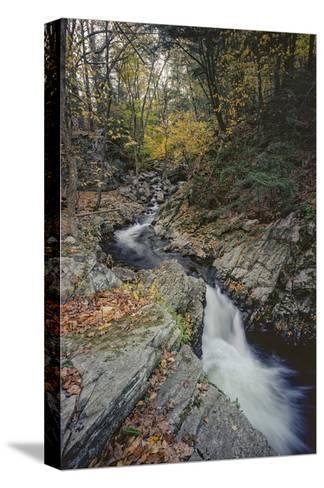 Woodland Stream Autumn Leaves-Henri Silberman-Stretched Canvas Print