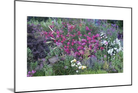 Oakland Spring Garden-Henri Silberman-Mounted Photographic Print