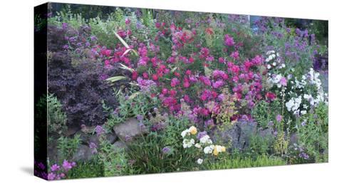 Oakland Spring Garden-Henri Silberman-Stretched Canvas Print