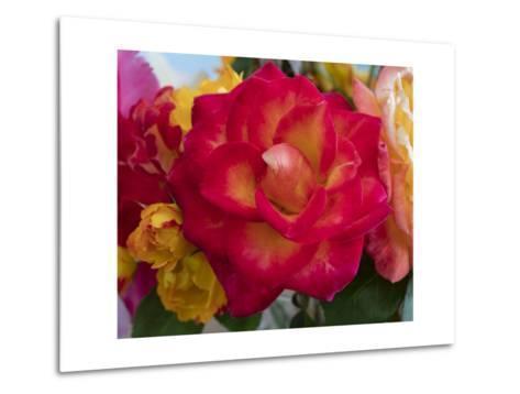 Flower Blooming-Henri Silberman-Metal Print