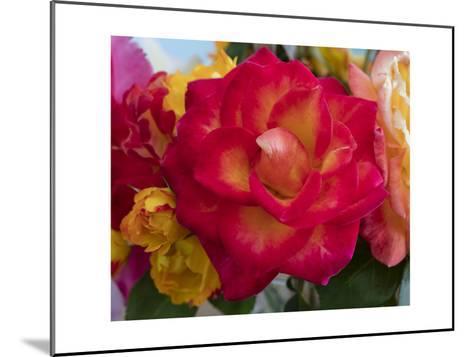 Flower Blooming-Henri Silberman-Mounted Photographic Print