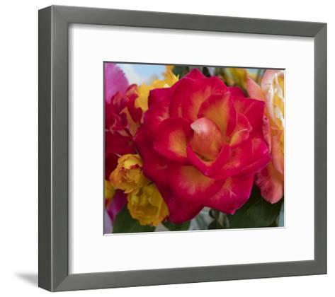 Flower Blooming-Henri Silberman-Framed Art Print