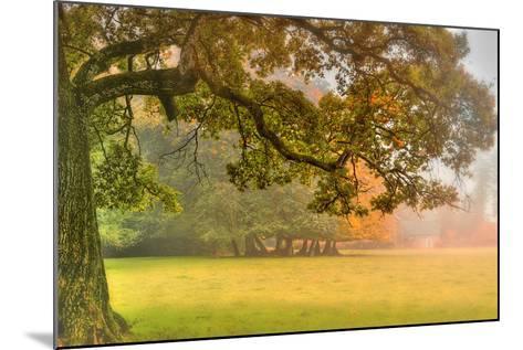 Foliage-Viviane Fedieu Daniel-Mounted Photographic Print
