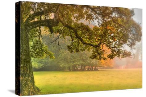 Foliage-Viviane Fedieu Daniel-Stretched Canvas Print