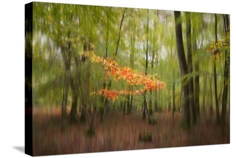 Revelation-Viviane Fedieu Daniel-Stretched Canvas Print